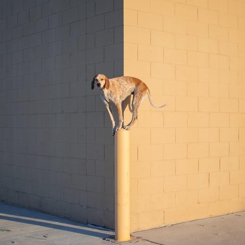 maddie the coonhound 2