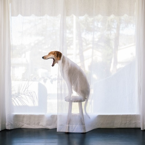 Maddie the Coonhound 7